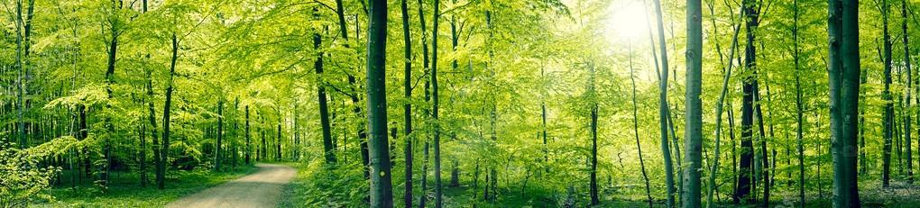 Фотообои Зеленый лес пейзаж