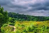 Nature in Denmark with dark clouds — Stock Photo