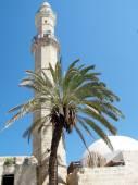 Palmera de jaffa frente mahmudiya mezquita 2011 — Foto de Stock