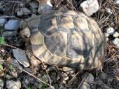 Shoham big turtle 2012 — Stock Photo
