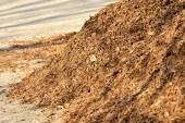 Bark mulch — Stock Photo