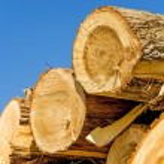 Chopped trees — Stock Photo #71378793