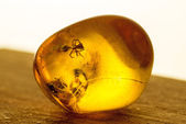 Amber with embedded insect — Stock Photo