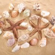 Sea shells with sand as background — Stock Photo #53062637