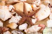 Close up of sea shells with sand  — Stock Photo