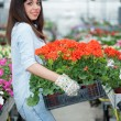 Young smiling woman florist working in the greenhouse — Stock Photo #73382409