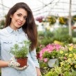 Young smiling woman florist working in the greenhouse — Stock Photo #73384563