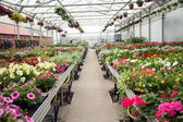Beautiful Greenhouse interior with different types of flowers — Stock Photo