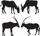 Vector silhouettes of animals — Stock Vector