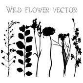 Set silhouettes of wild flowers vector — Stock Vector