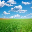 Green wheat field and blue sky with cumulus — Stock Photo #55948427