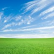 Green wheat field and blue sky with cirrus — Stock Photo #55948519