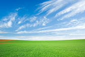 Green wheat field and blue sky with cirrus — Stock Photo