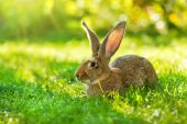 Brown rabbit sitting in grass — Stock Photo
