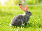 Grey rabbit sitting in garden — Stock Photo