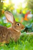 Brown rabbit sitting in flower garden — Stock Photo