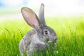 Gray rabbit in green grass — Stock Photo