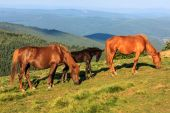 Wild horses on the hill — Stock Photo