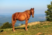 Wild horse on the hill — Stock Photo