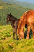 Wild horse and foal on the hill — Stock fotografie