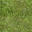 Seamless summer grass texture — Stock Photo #62021791