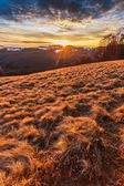 Sunset on the hill — Stock Photo