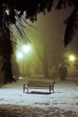 Foggy night in the park — Stock Photo