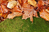 Wet foliage background — ストック写真