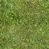 Seamless summer grass texture — Stock Photo