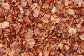 Dead fallen leaves background — Stock Photo