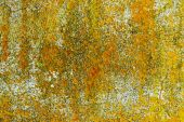 Yellow lichen on concrete wall — Stock Photo