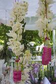 Orchid Arrangement — Stock Photo