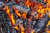 Red wild fire — Stock Photo