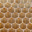 Bee honeycombs — Stock Photo #53751393