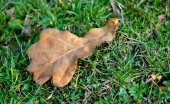 Aging autumn leaves — Stock Photo