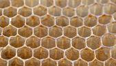 Bee honeycombs — Foto de Stock