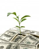 Plant in money — Stock Photo