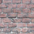 Brick wall — Stock Photo #55295733