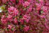 Sakura twig — Stock Photo