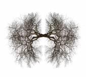 Tree lungs — Stock Photo