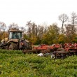 Tractor cultivating — Stock Photo #75876745