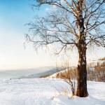 Winter landscape — Stock Photo #59279297