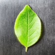 Green leaf lying on scratched metal. Top view — Stock Photo #67236113