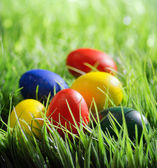 Colorful Easter eggs on green grass in the morning — Stock Photo