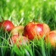Juicy fresh red apples on green grass — Stock Photo #68217171