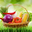 Fresh vegetables in the basket on green grass and on nature back — Stock Photo #68218035