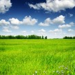 Green field and forest under the blue sky with white clouds — Stock Photo #68739653