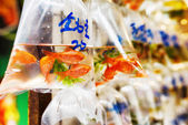 Goldfishes in plastic bags hanged on the wall in a pet shop sell — Stock Photo