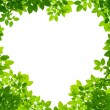 Green Leaves in heart shape on white background — Stock Photo