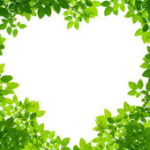 Green Leaves in heart shape on white background — Foto de Stock
